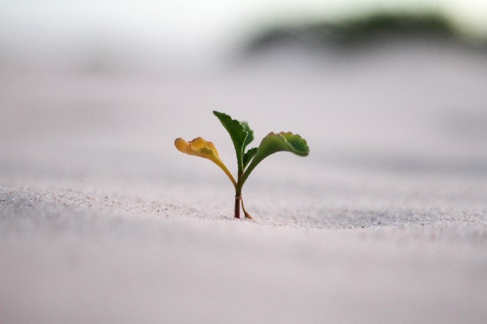 How to Utilise the Growth Mindset to Overcome Any Setbacks in Life