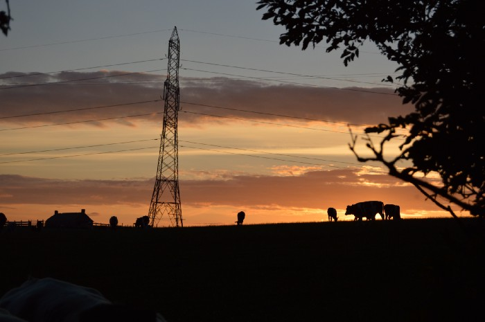 Dusk on a farm, the light is dim, the sun setting, a tower in the background and some cows settling in for the night.