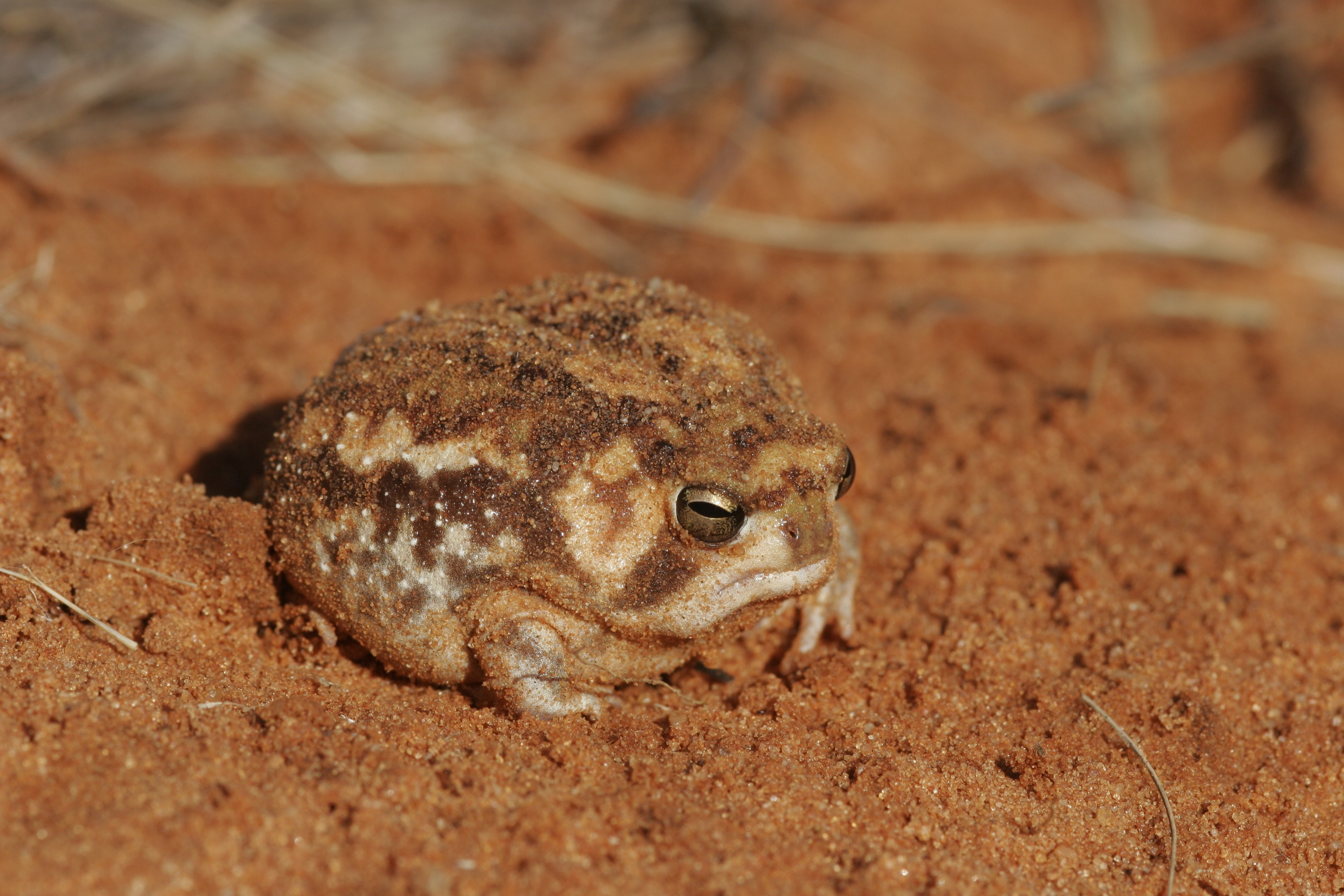 a grumpy looking frog sits in a bit of sand