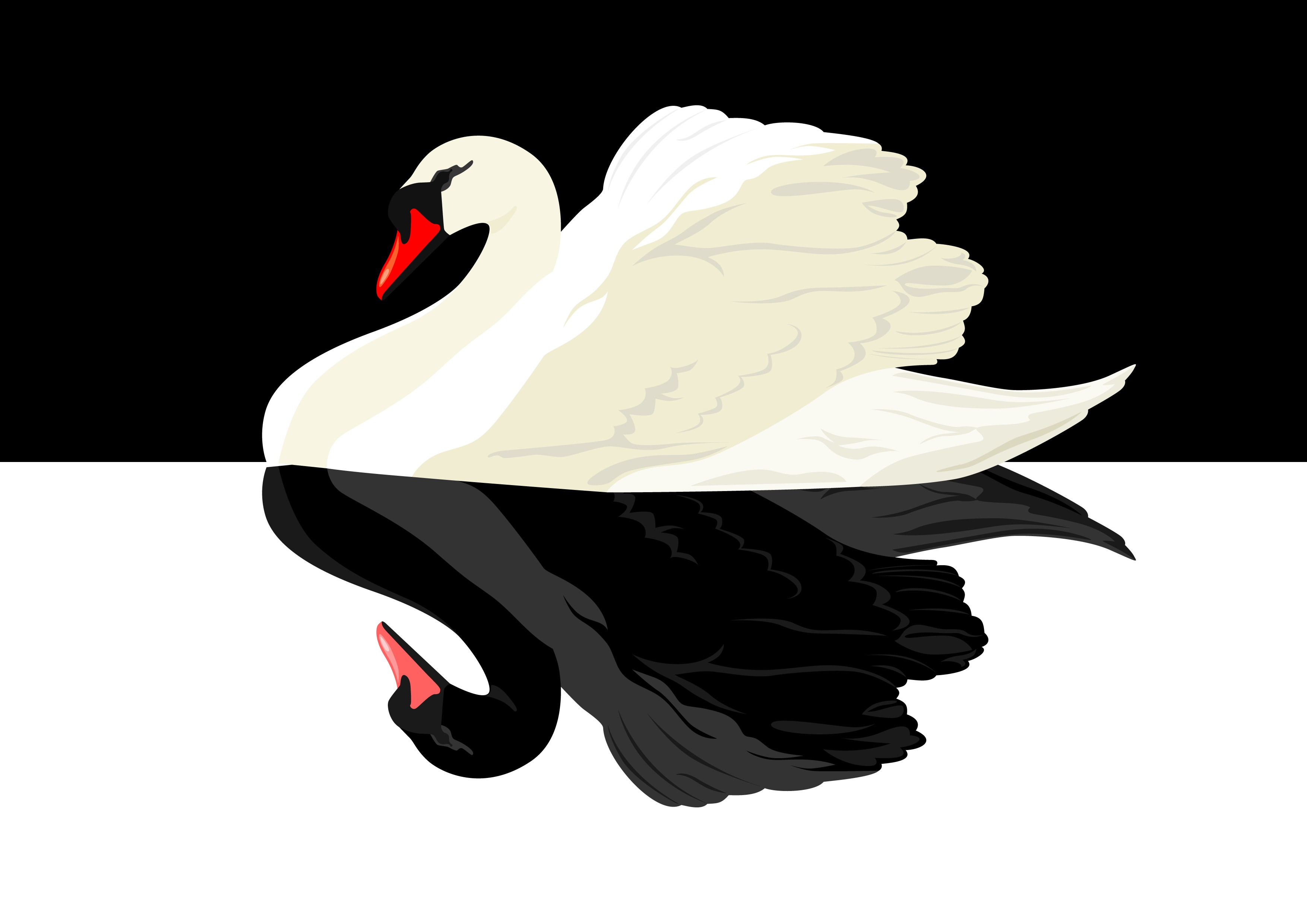 A white swan with its reflection as a black swan.