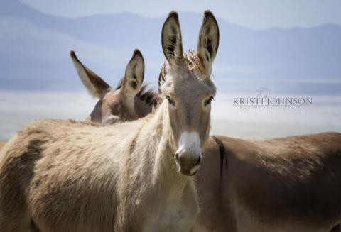 5 Things You Didn't Know About Wild Burros - AWHPC - Medium