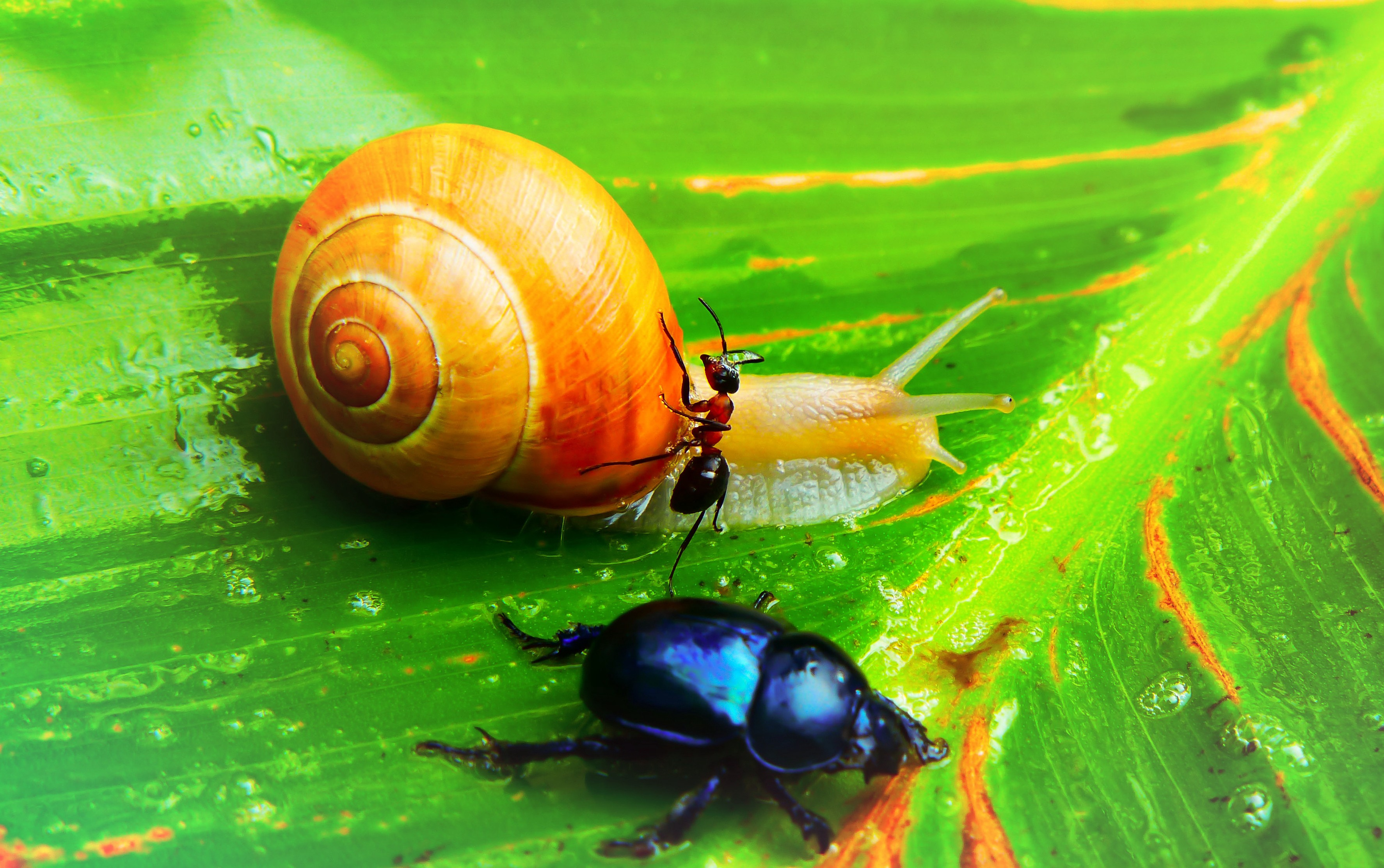 snail in a race with a beetle and an ant