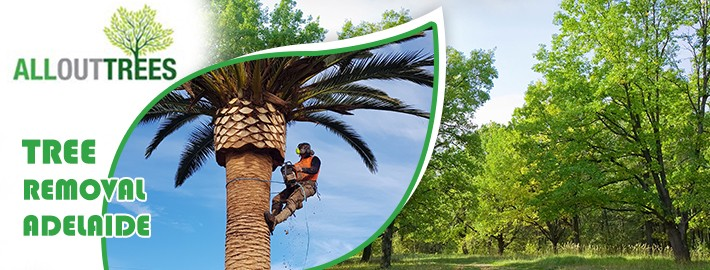 Removing Trees From A Heavily Wooded Lot- Make The Most