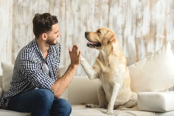 man high fiving a yellow lab—hope for the future.