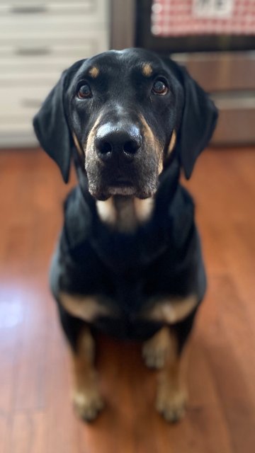 Moose, a very good boy.