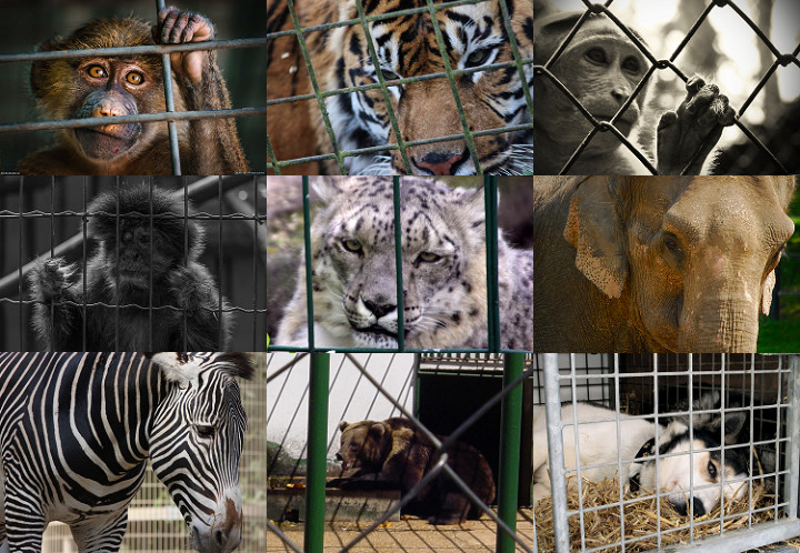 Should wild animals be used for entertainment at circus or zoos?