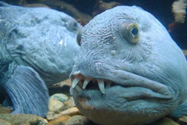 Biologist from the University of Calgary are delighted that a new species of fish was found in Lake Chestermere. Dr. Adam Sigur, a marine biologist, ...