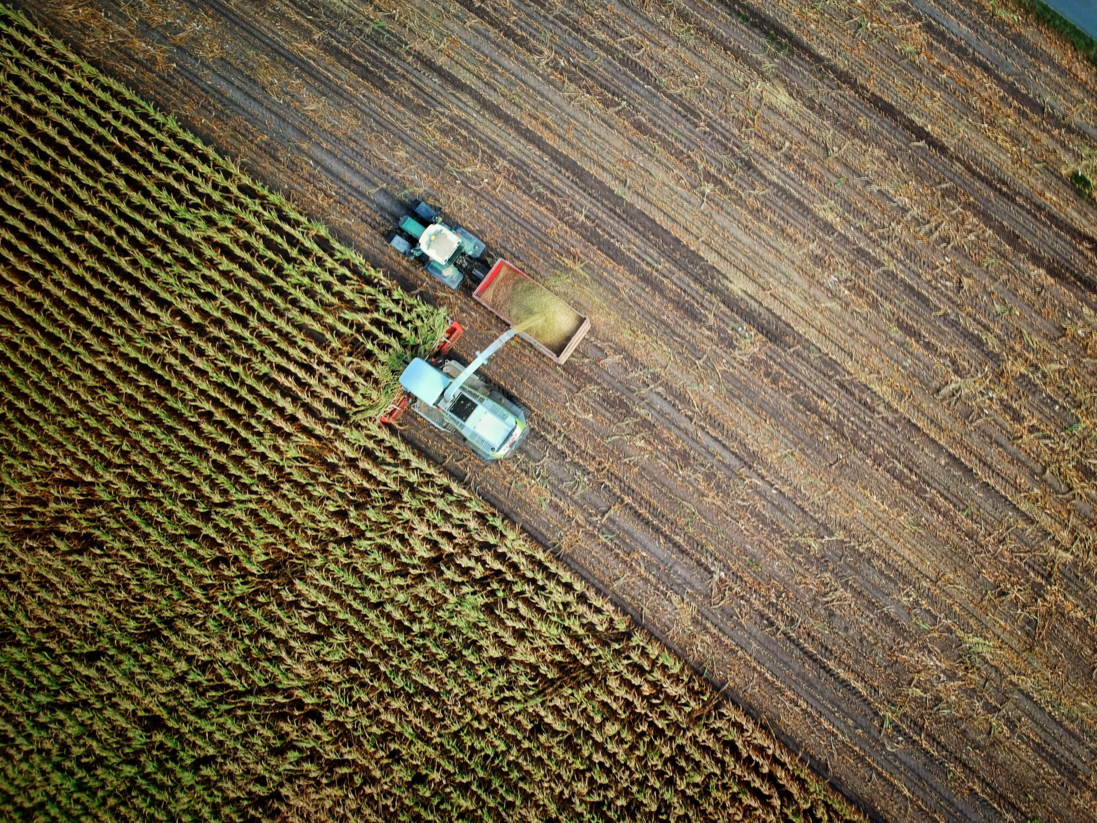 Aerial photo of industrial monocropping
