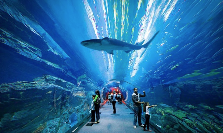 The Lost Chambers Aquarium   The Vacation Builder   Your Guide to Atlantis The Palm