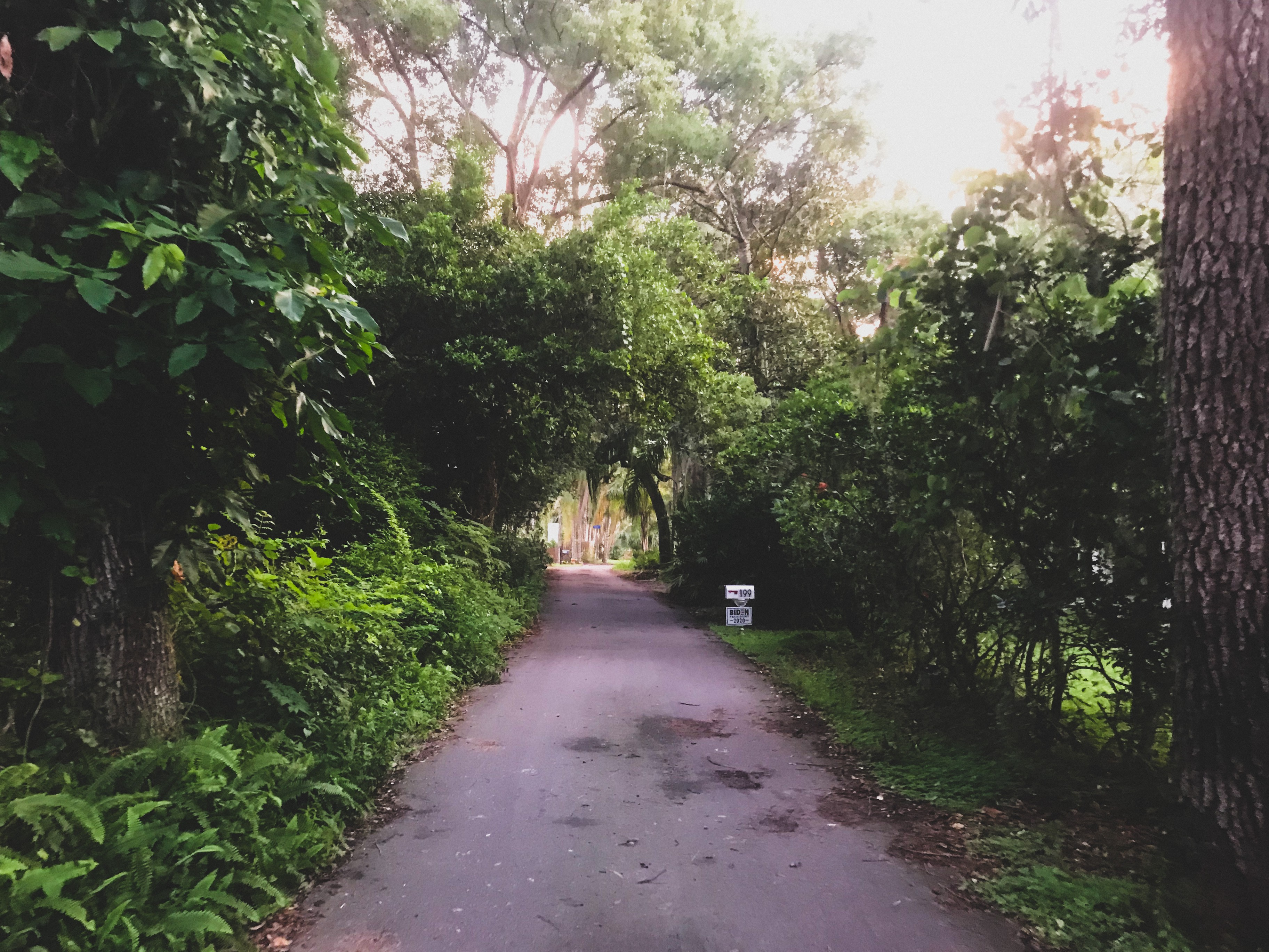 A small road lined with lush tropical foliage, a Biden sign halfway down the road.