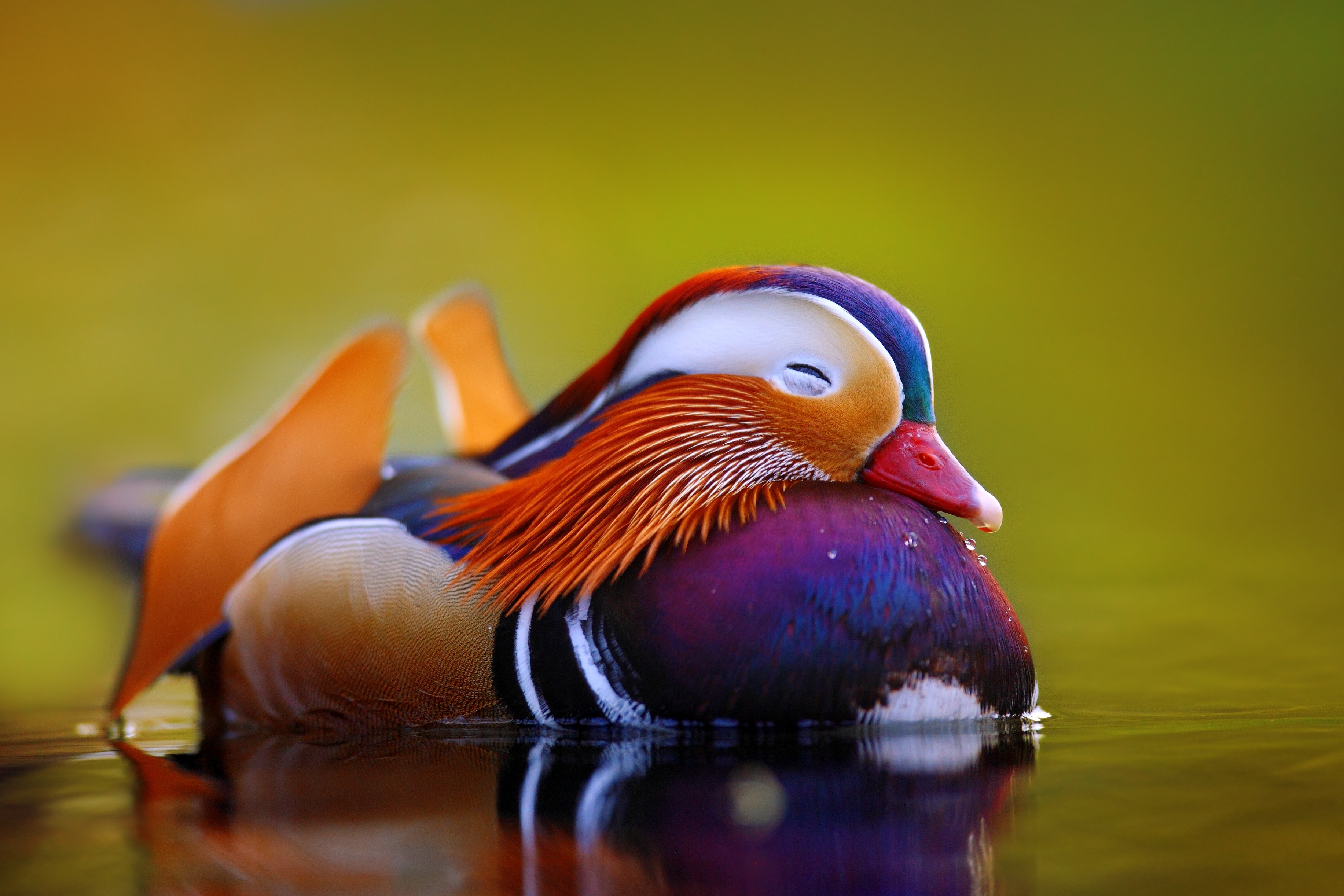a very brightly colored duck in hues of orange, purple, and blue—that almost resembles a toy or a painted statue