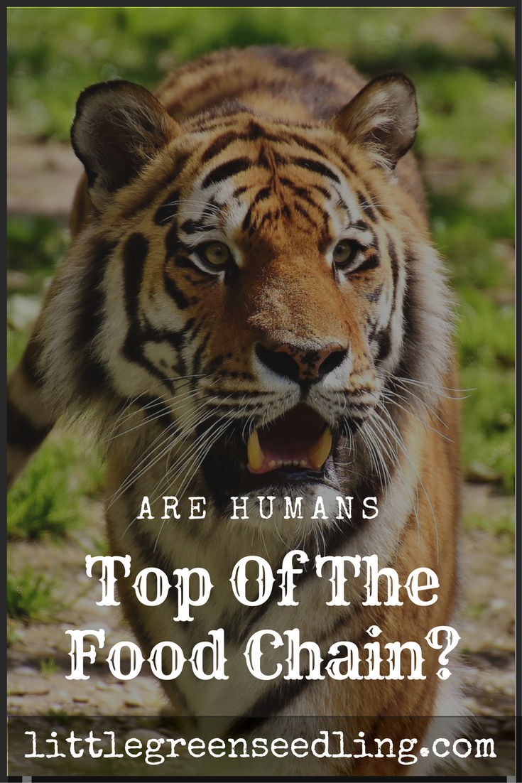 Are Humans Top Of The Food Chain? - Bethany Ivy Ⓥ - Medium