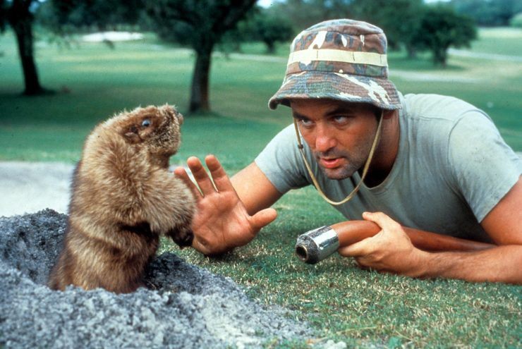 I Just Binge-Watched Every Bill Murray Movie and This is…