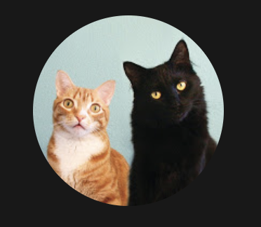 A shorthaired orange tabby with a white bib next to a longer-haired black cat on a pale blue background.