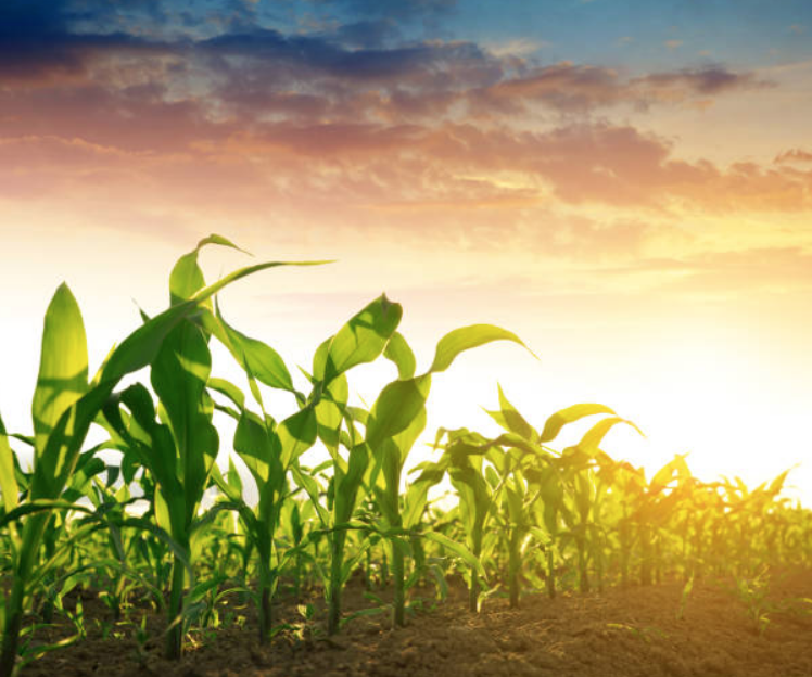 Next Gen Farming and the Future of Agtech - Jemm Ventures
