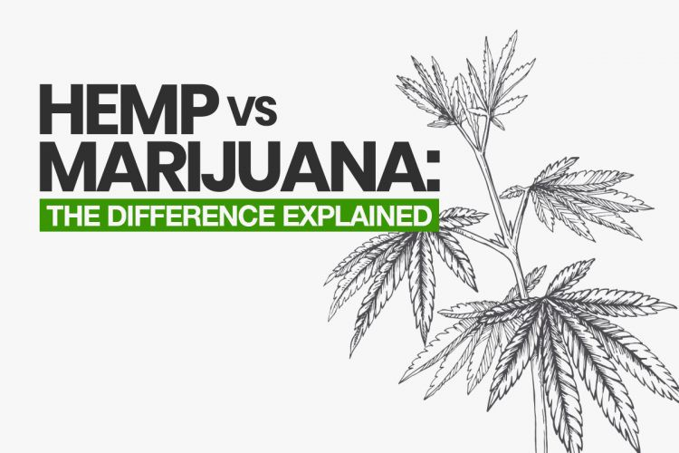 Three Types of Hemp Extract