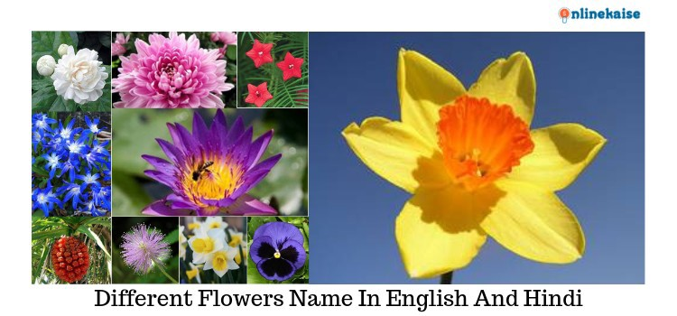 flowers name in english And Hindi