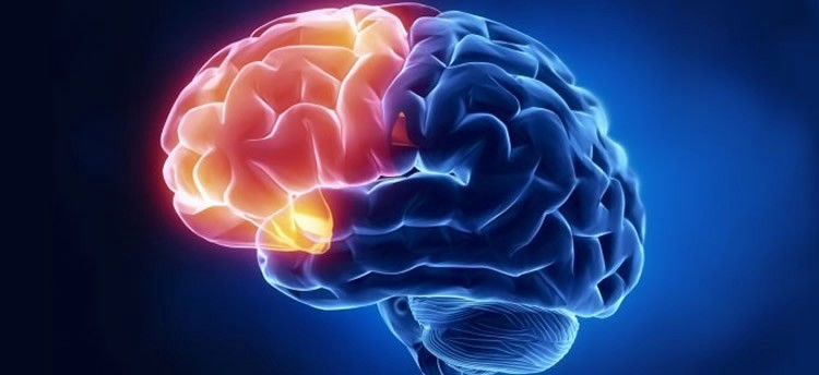 Modeling the human brain with ML