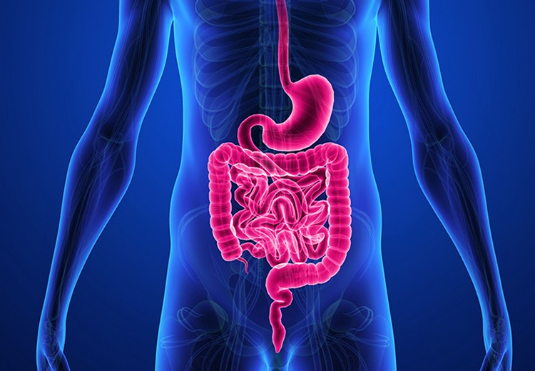 The Importance of a Gastroenterologist - Dr  Peyton P