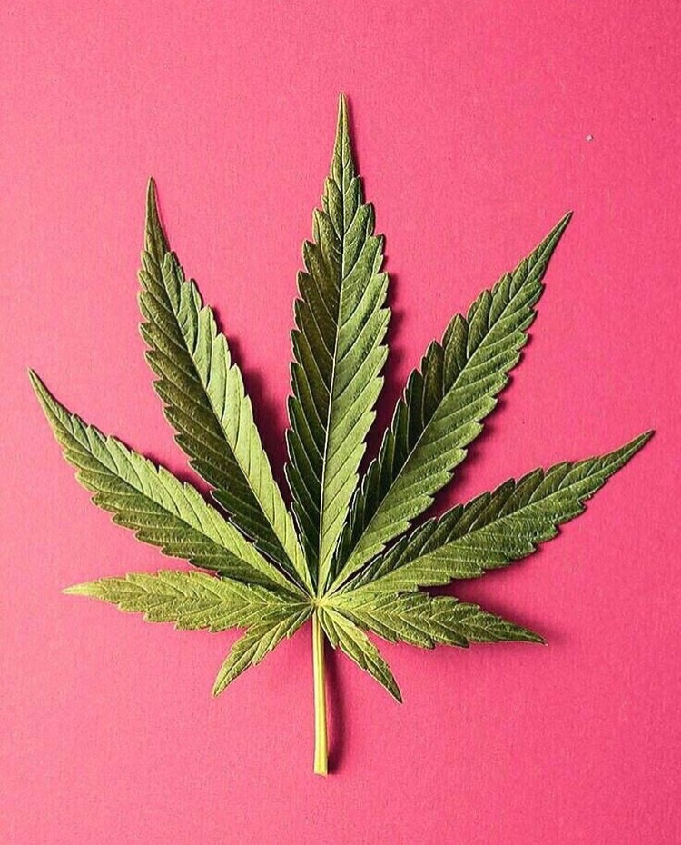 Top 18 Companies Giving Cannabis a Makeover - Adriana
