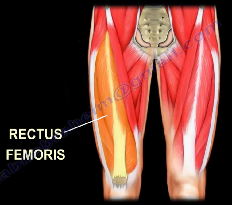 Hip Pain- Strain of the Rectus Femoris Muscle - Nabil