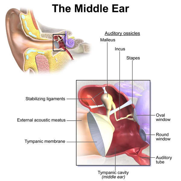 How to Clear Your Blocked (Plugged) Ears! - James Taylor-Loftus - Medium
