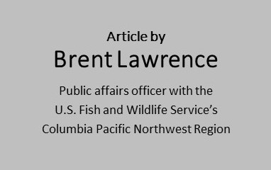 Article by Brent Lawrence, public affairs officer with the U.S. Fish and Wildlife Service's Columbia Pacific Northwest Region.