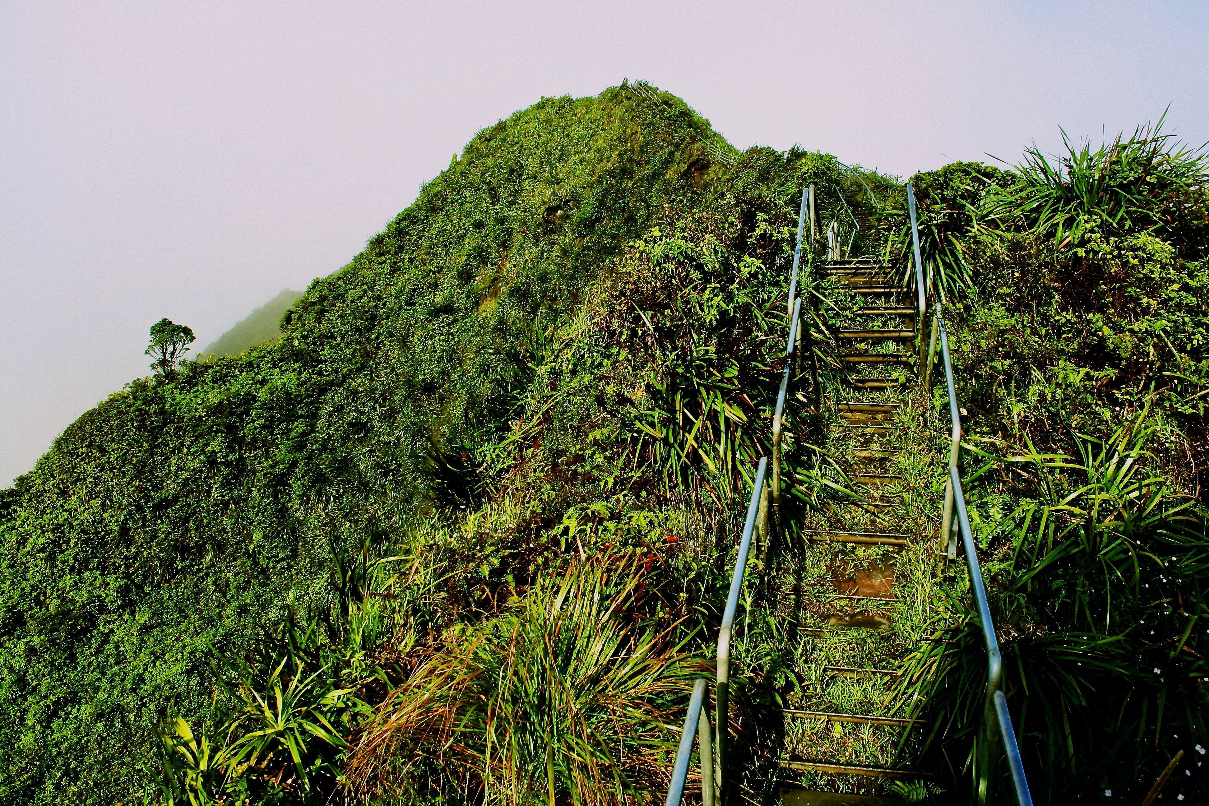 A ladder going up on a hill covered with grass