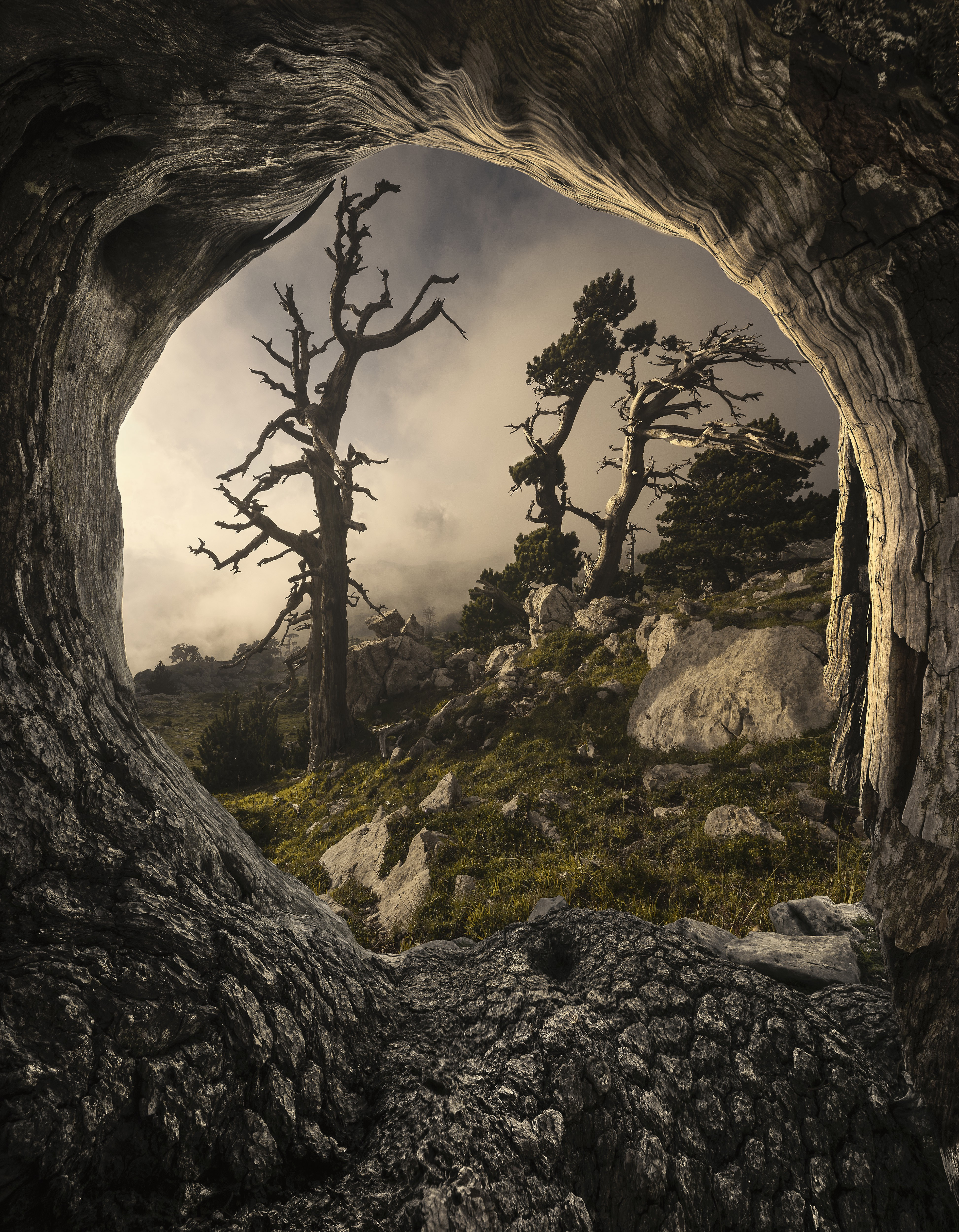 The camera looks out from a cave and out at an almost prehistoric looking world including mossy rocks and bare trees