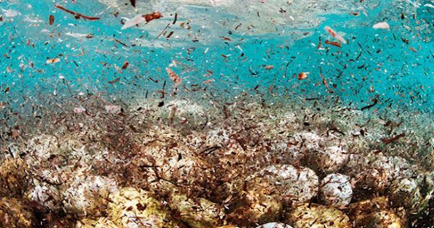 Microplastic: The Invisible Pollutant