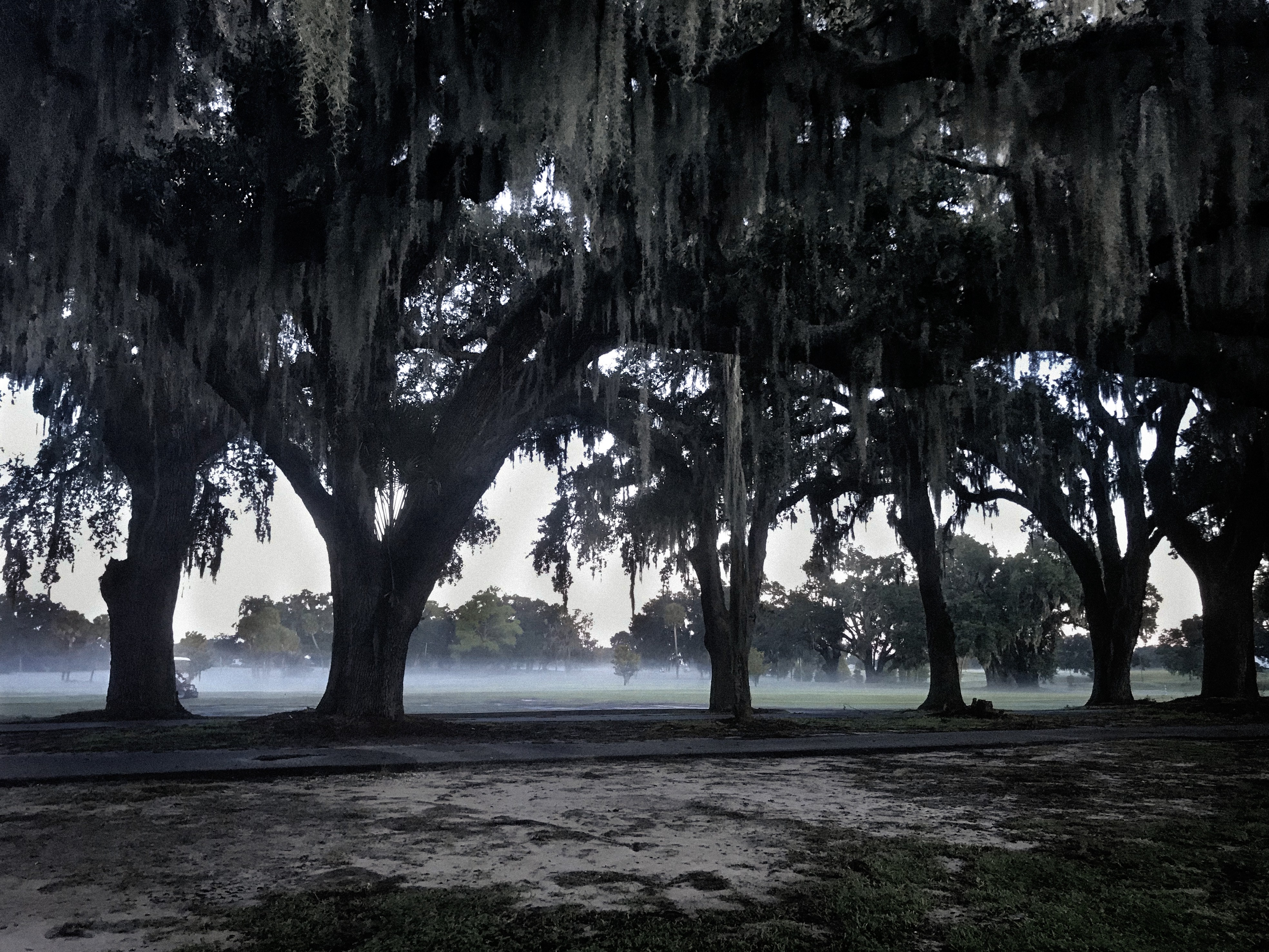 A misty field in the distance, silhouettes of live oak trees and spanish moss in the foreground.