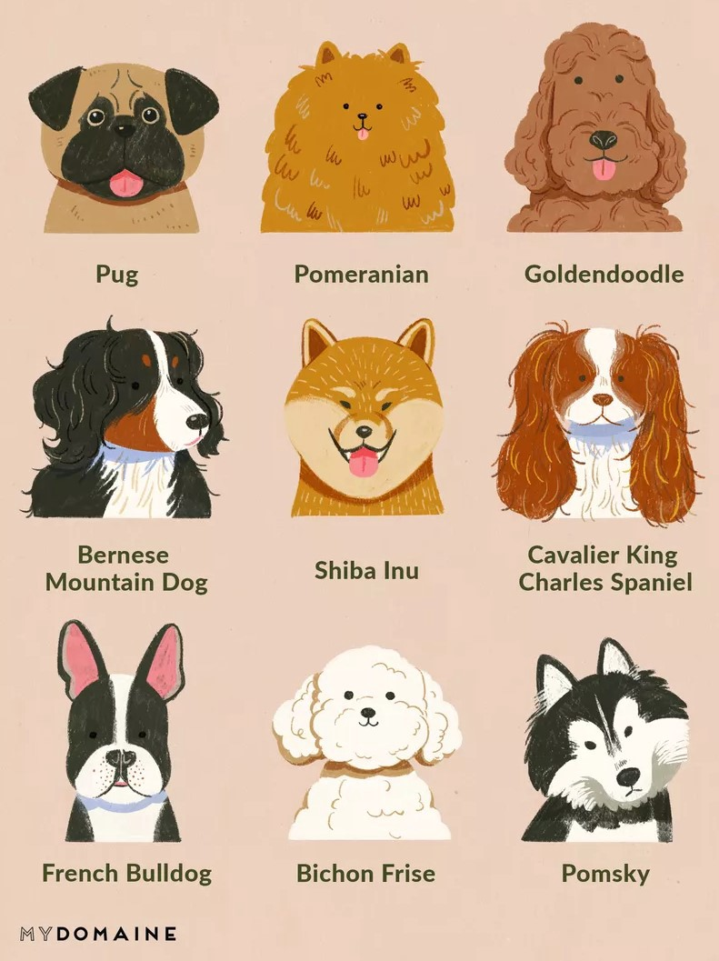 Dog Breeds Classification With CNN Transfer Learning