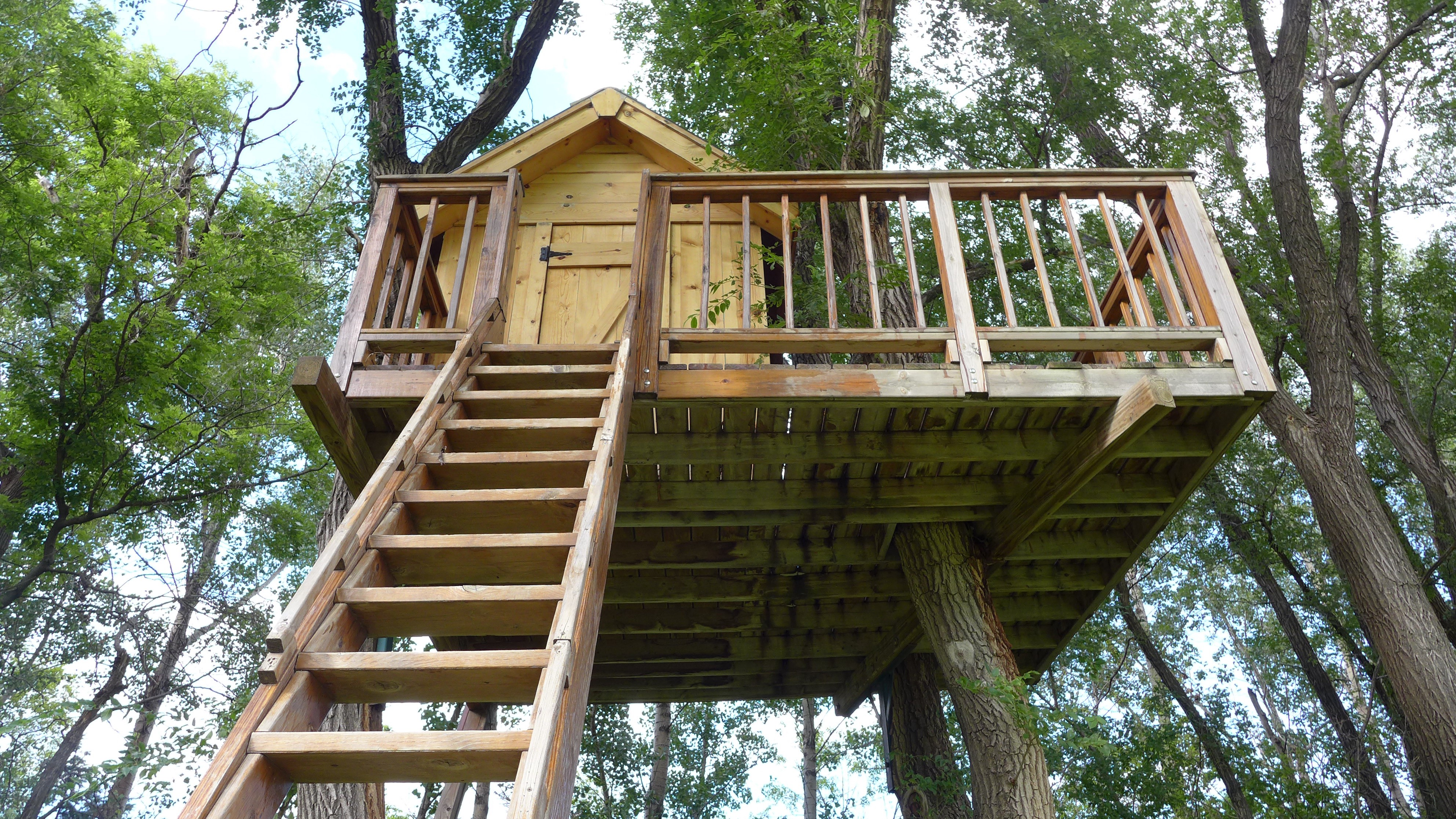 Picture of: The Best Trees For Building Treehouses By Sara Thompson Medium
