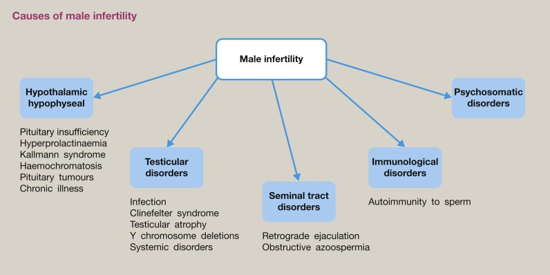 what male infertility labs