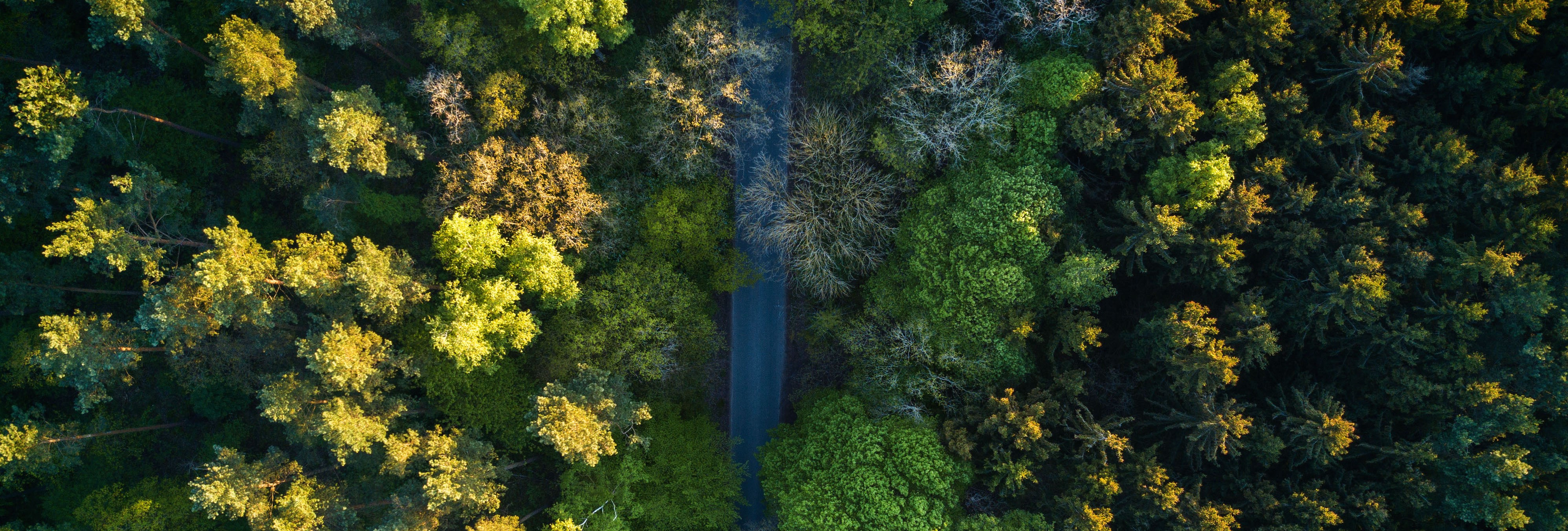 The Drones That Plant Trees and Deliver Profits - Nexus Media