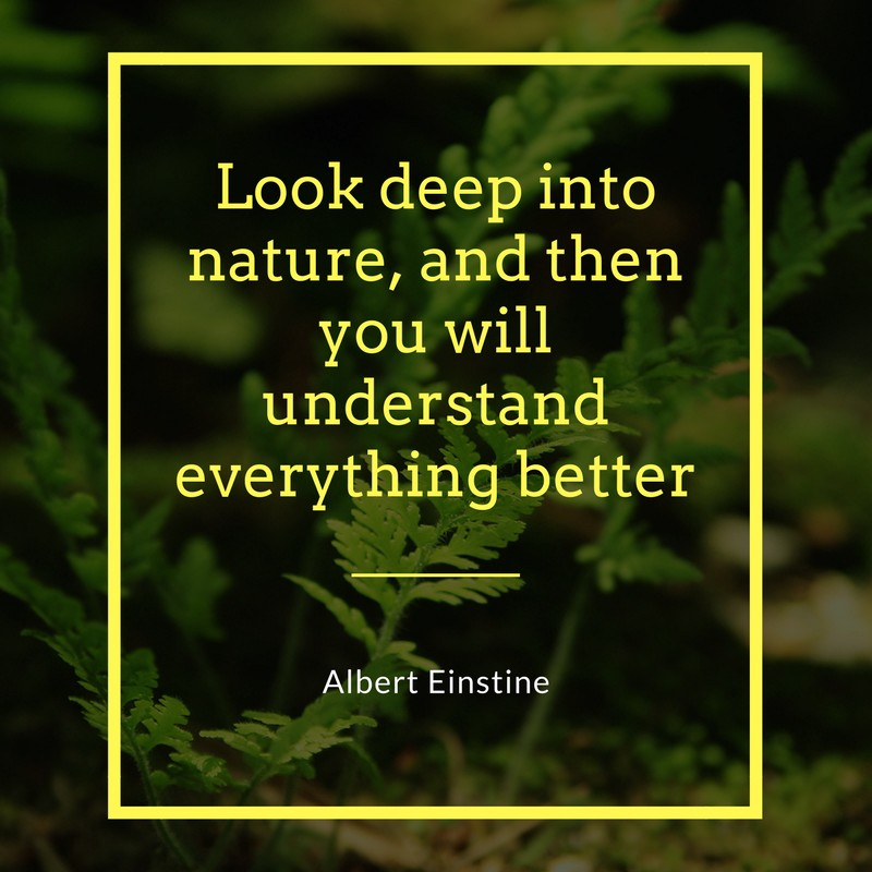 Beautiful Quotes On Nature Morning Sunset And Rain By Quotes Flux Medium