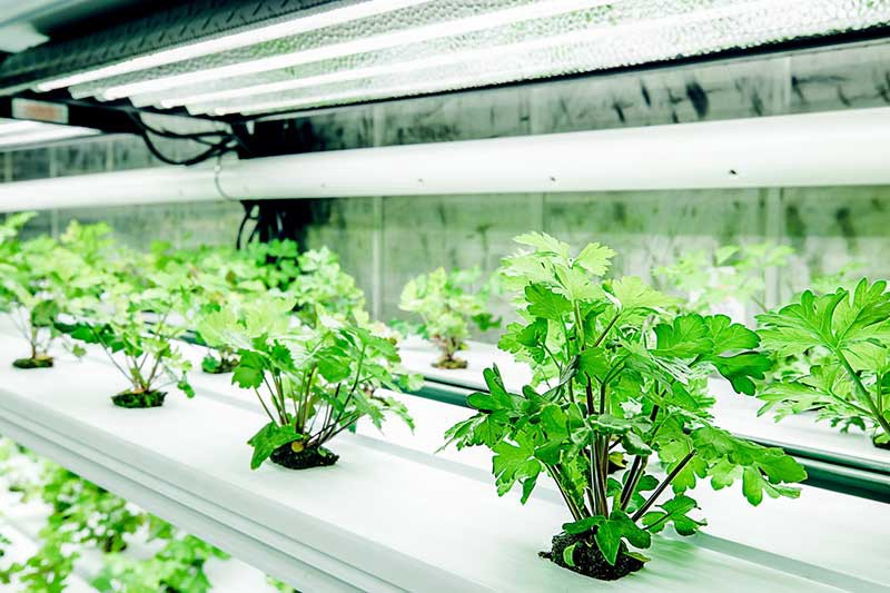 Nutrient solutions hydroponic system