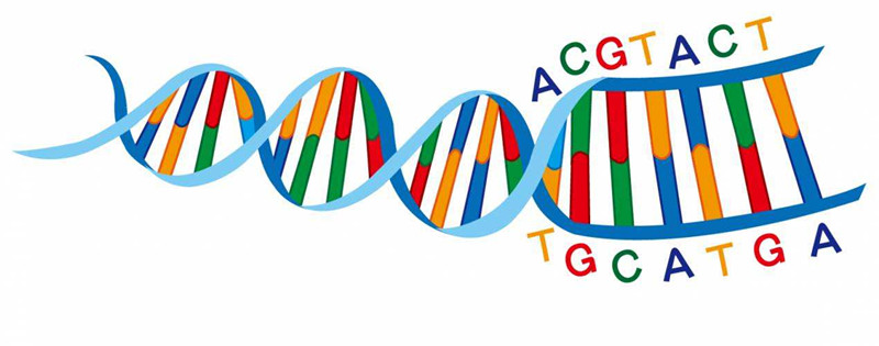 How Much Do You Know about DNA Sequencing? - Ivan Chen - Medium