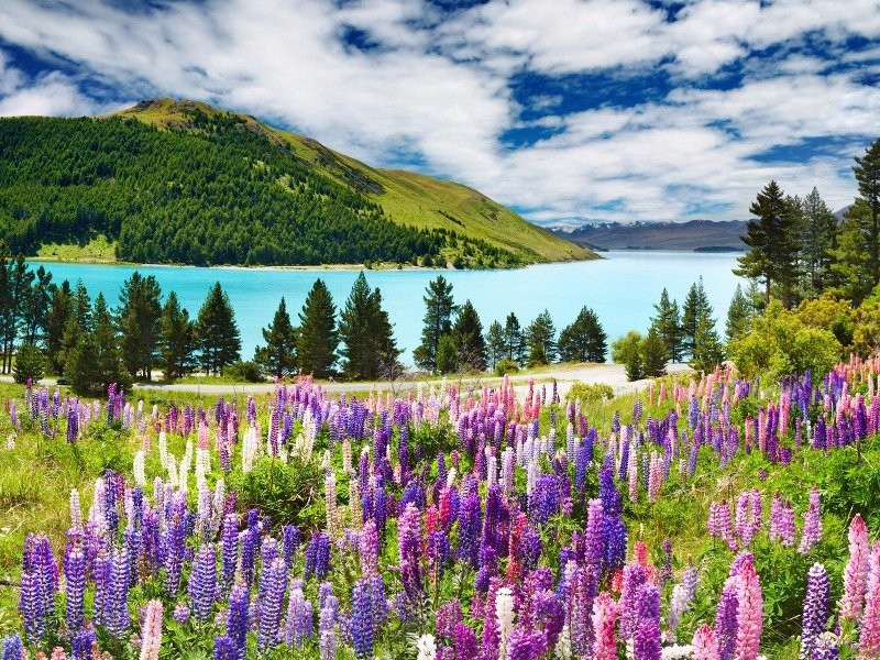 10 Must See Natural Wonders on New Zealand's North Island