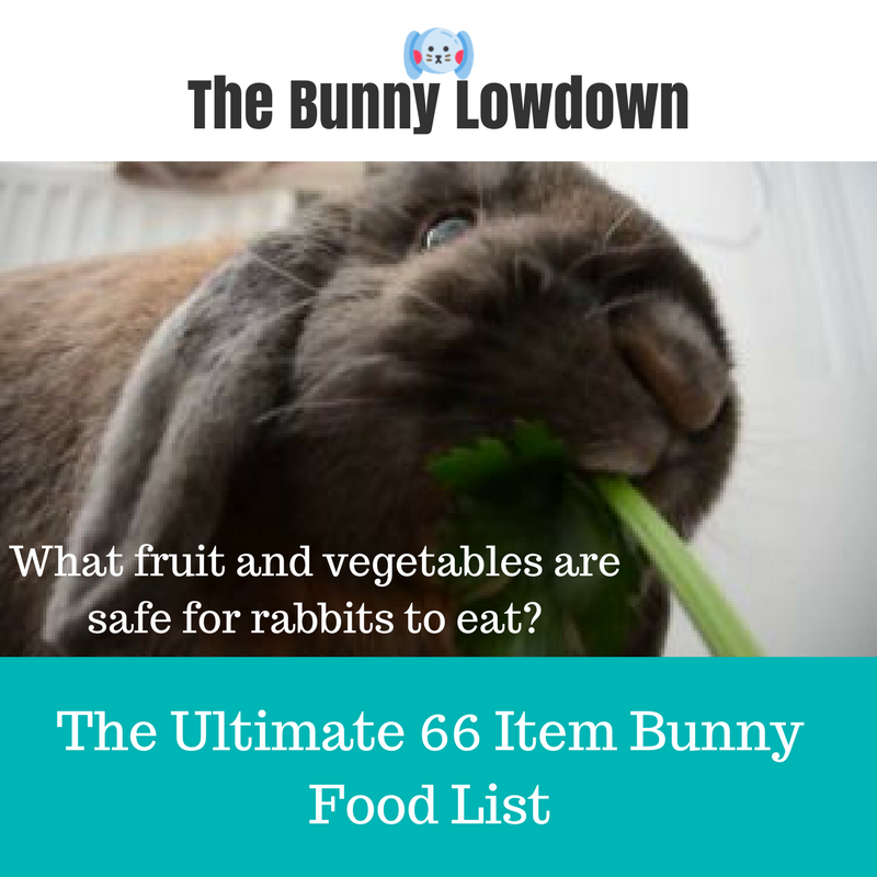 Rabbit Food List What S Safe For My Rabbit To Eat