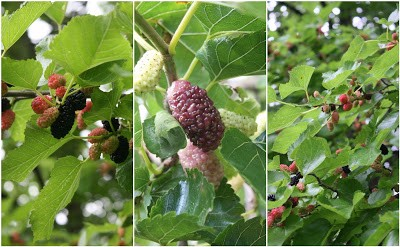 Mo Mulberry A Guide To Probably Everything You Need To Know
