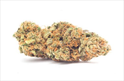 Top 3 CBD Highest CBD Strains - CBD Origin - Medium