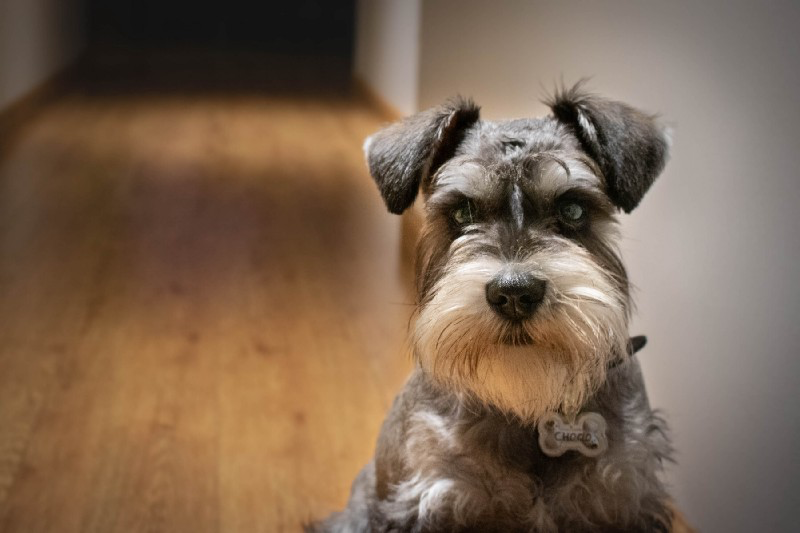 Deep Learning for Dog Breed Classification