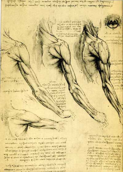 Leonardo da Vinci  Annotated Drawings