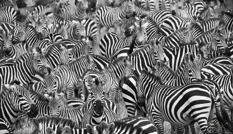 Be a Zebra - Yes Exactly