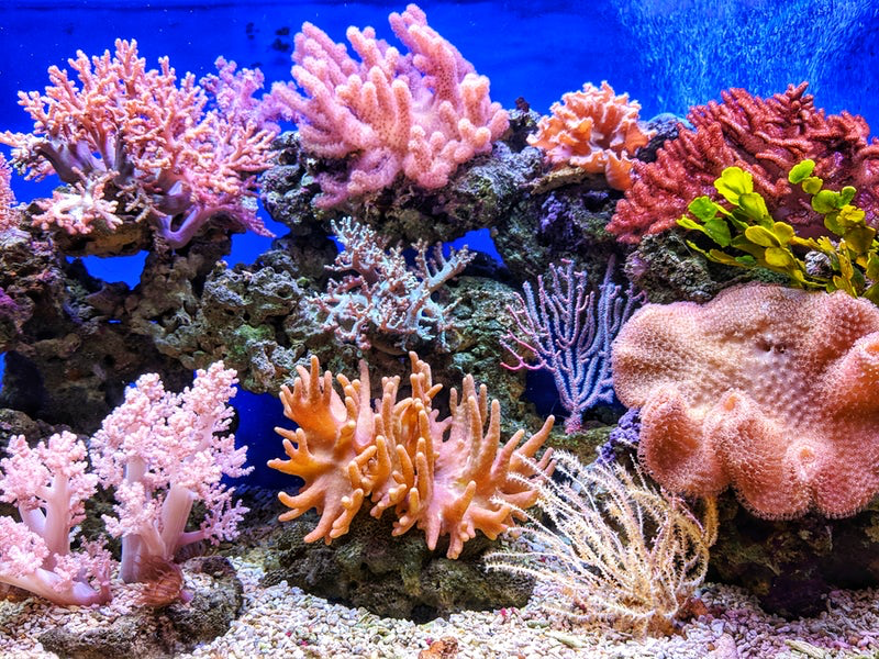 Saving the Coral Reefs. Global Cooperation is Saving the Coral ...