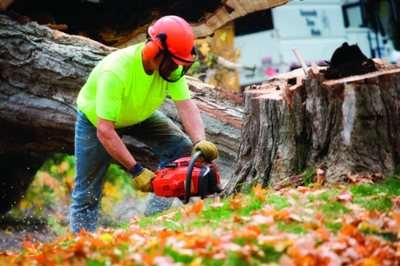 3 Important Things You Need to Know Before Hiring a Service Provider for Tree Removal