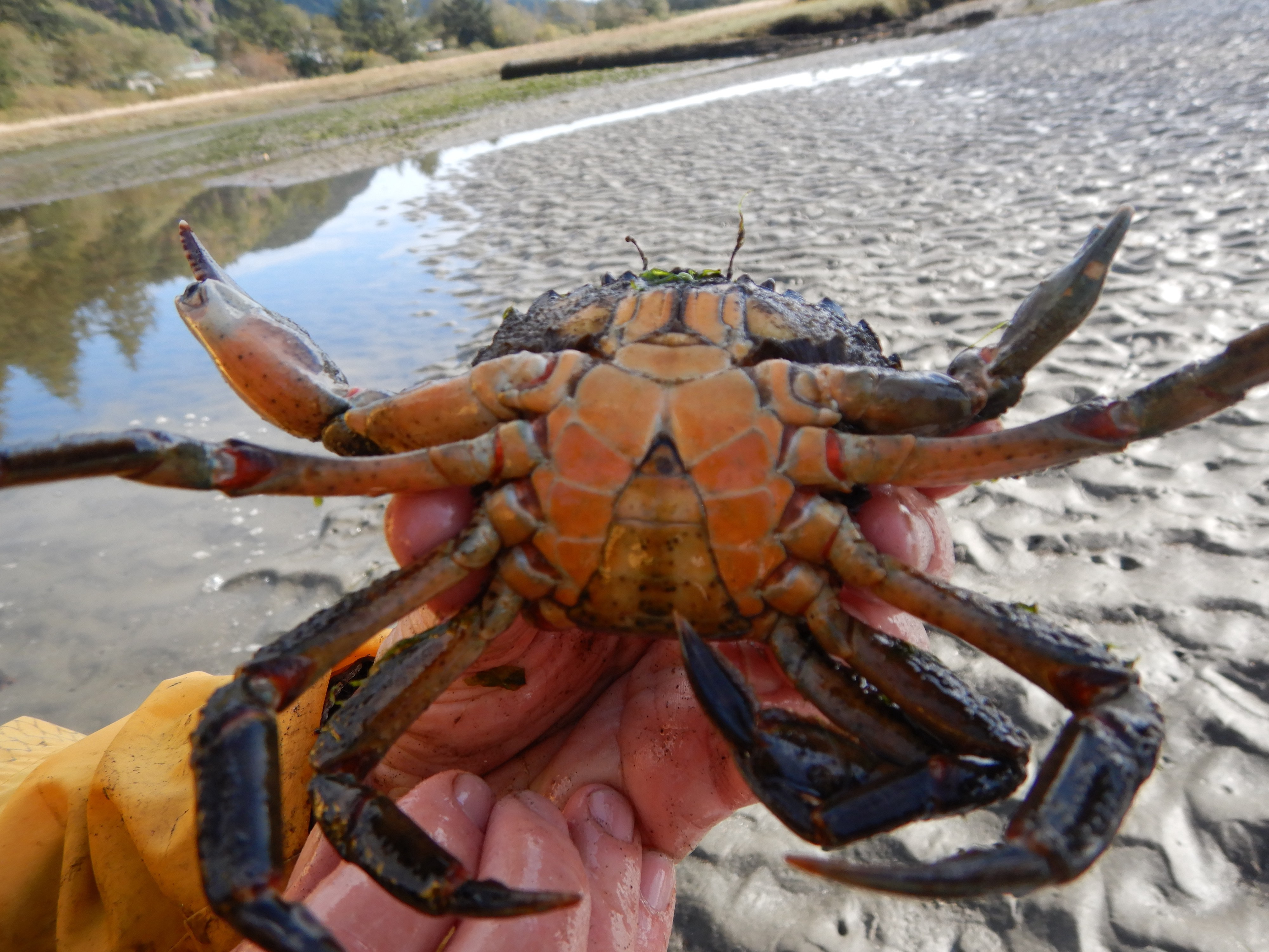 person holding crab with belly facing camera