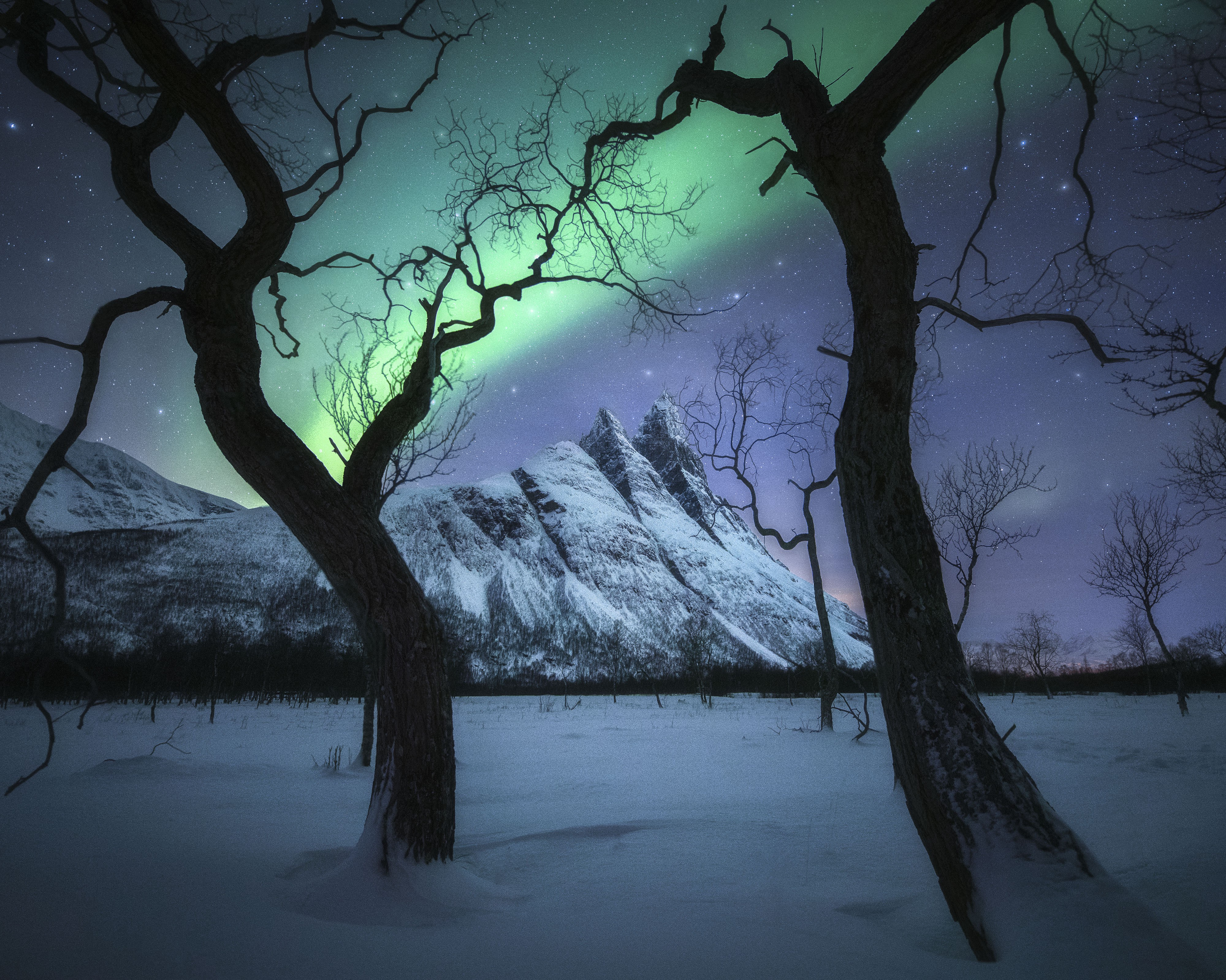Two bare trees frame a streak of green northern lights flashing above a snowy mountain range