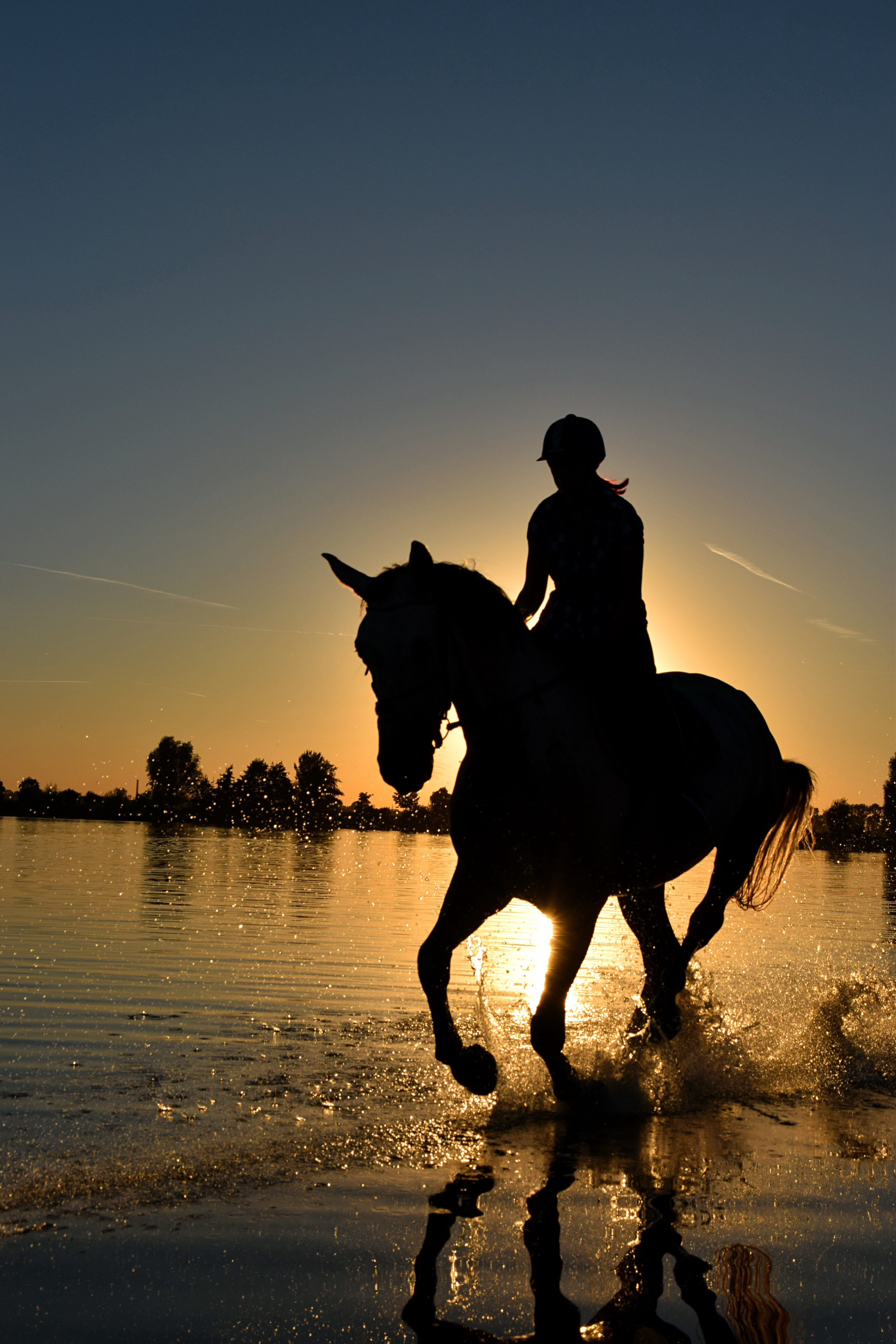 The Differences Between English And Western Horseback Riding By Zoe Reardon Medium